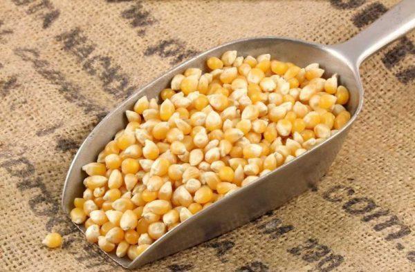 kukurūzų kruopos